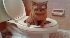 Marmalade the cat uses the tiolet, amazing!